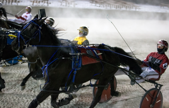 They'll be off and racing tonight at Hawthorne (Four Footed Fotos)