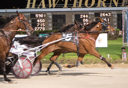 Double A Goldrush, a starter in tonight's second race Open Trot, made his lone start in 2018 at Hawthorne s winning one with Ross Leonard. It also came in an Open Trot (Four Footed Fotos)