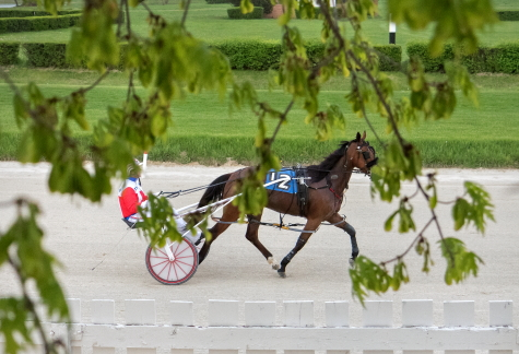 With racing temporally halted at Hawthorne, the only horses on its racetrack are those training during the daytime hours. (Four Footed Fotos)