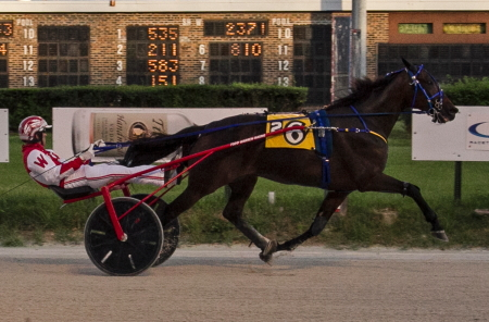 The Chupp Racing Stable's Pine Dream (Todd Warren) goes after his second straight Open Trot victory tonight in Saturday's seventh race, (Four Footed Fotos)