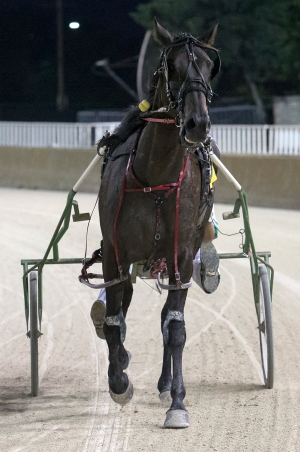 Allbeastnobeauty, the 2019 Illinois Aged Pacing Mare of the Year, takes on Lilly Von Stupp and five other Illinois bred pacing distaffers in Saturday's ninth race. (Four Footed Fotos)