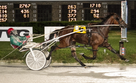 The Roshun Trigg Stable's Ryans Loan Shark (Cordauius Stewart) is a major threat in tonight's $42,300 Cardinal freshman pace after his victory a couple of weeks ago in the first round of the Incredible Finale stake series. (Four Footed Fotos)